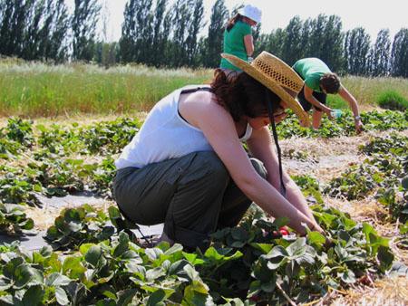 Me picking strawberries