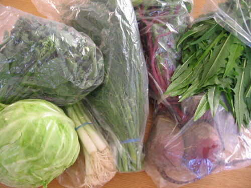 My haul: cabbage, gai lan, green onions, dill, beets with beet greens, dandelion greens