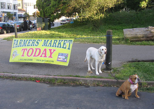 Dogs wait patiently in front of Farmer's Market banner